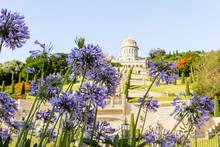Purple  Flowers - Scilla Hyaci...