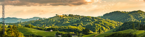 Fotomural Vineyards panorama Leibnitz area famous destination wine street in south Styria in summer
