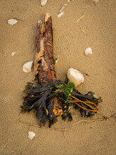 Stick, Seaweed And Shells On A Beach