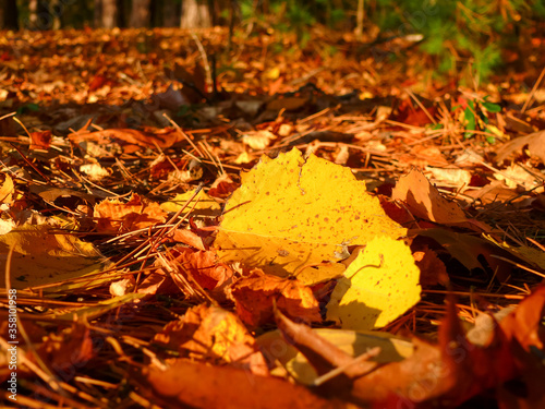 Photo Yellow aspen leaf among leaves and pine needle debris on an autumn forest floor