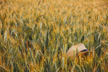 A Forgotten Farmer's Hat Is Lying Over The Wheat Field Grow In The Cultivated Soil. Conceptual Image