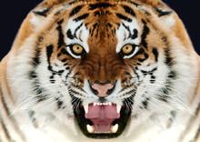 Primo Piano Di Tigre