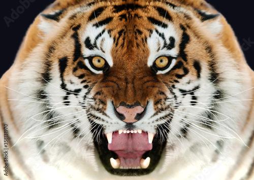 Primo piano di tigre Canvas-taulu