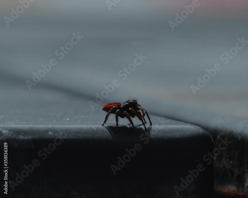 L'araignée Canvas Print