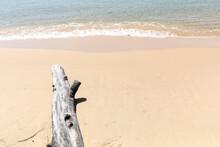 Dry Trees On The Beach, Lazy B...