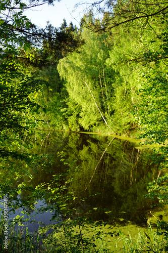 Trees on the lake © Valery Shanin