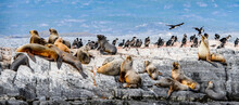 It's Sea Lions Lying On The Rock In Antarctica