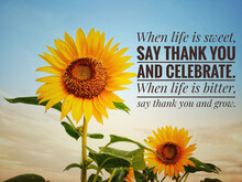 Inspirational Motivational Quote - When Life Is Sweet, Say Thank You And Celebrate. When Life Is Bitter, Say Thank You And Grow. With Two Beautiful Sunflowers And The Bright Blue Sky Background.