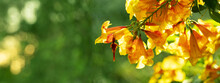 Orange Yellow Flower Bush Bloo...