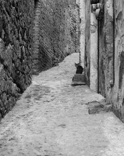 Narrow Streets Of Taxco, Mexican Town, Alley, Cat