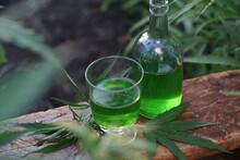 Marijuana Farm. Growing Industrially Marijuana For Pharmaceutical Needs. Marijuana Plantation. Narcotic Plants In Agriculture Industry. Cannabis Sativa Plants On The Field.
