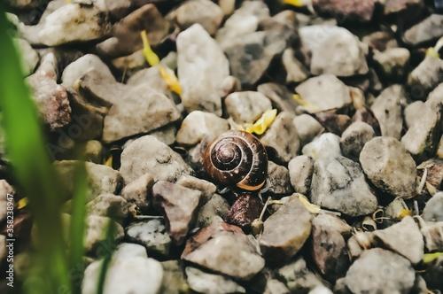 Ślimak w przybliżeniu na kamieniach, kolory sepia