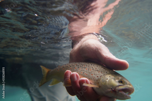 catch of a brown fly trout Canvas Print