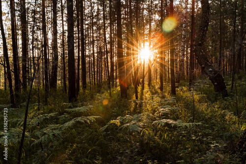 the sun shines through the trees at sunset, glare from the sun in the forest, evening photo taken in a dark key