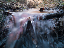 Water Murmurs Over The Roots O...