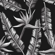 Creative Black White Seamless Illustration Bird Of Paradise, Strelizia Flowers And Palm, Banana Leaves On The Black Background. Design Fabric Pattern, Trendy Foliage Wallpaper.