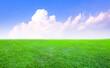 Leinwandbild Motiv green grass field