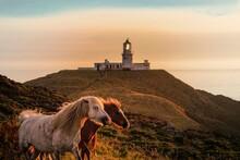 Horses Silloete  Agains A  Sun...