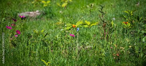 Photo prato fiorito di fiori di campo colorati