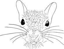Vector Squirrel Illustration S...