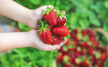 A Child With Strawberries In T...