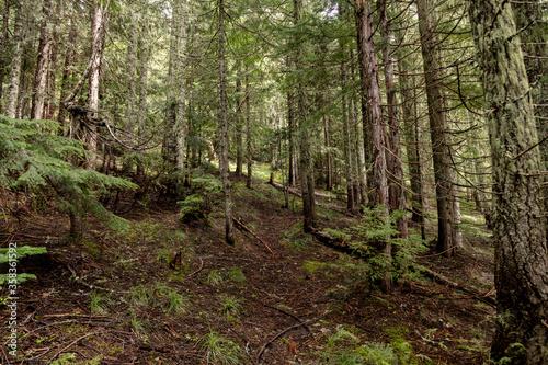 Pacific Northwest Evergreen forest
