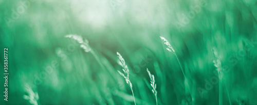 Fototapeta soft background of green grass. soft focus obraz