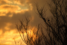Winter Tree Silhouette With 3 ...