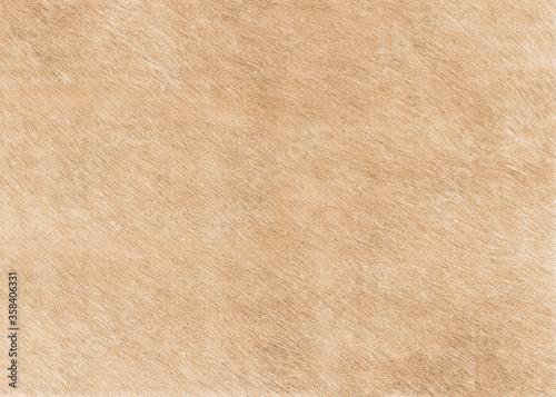 Fotografie, Tablou Cream fur texture high resolution
