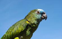 Green Parrot Bird On Blue Sky