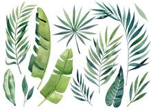 Tropical Leaves Watercolor Han...
