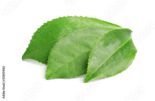 Green leaves of tea plant isolated on white #358434163