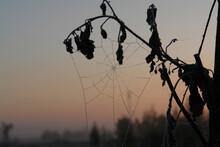 Frozen Dew Drops On The Cobweb...