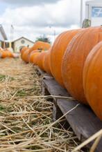 Pumpkin On Hay Bale