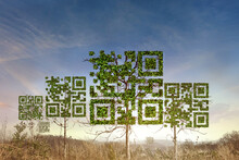 QR Code Tree With A Symbol In The Dry Forest Background. Technology ,Business And Nature Concept.