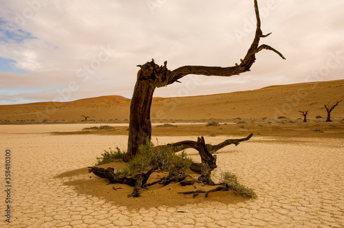 scenic view over landscape with lonely tree namibia Fototapete