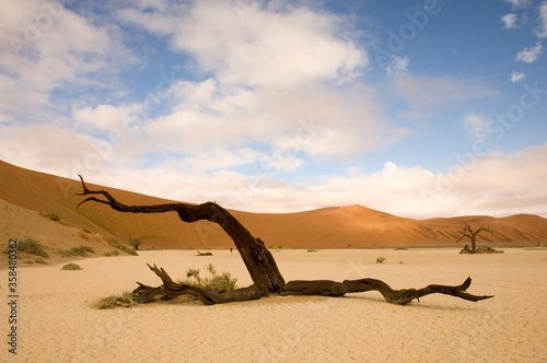 Foto scenic view over landscape with lonely tree namibia