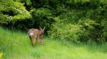 Deer And Her Newborn Fawn