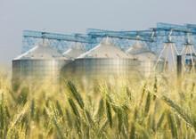 Grain Barley Elevator Silo In The Countryside