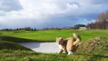 Stunning Light On Golf Course ...