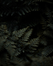 Fern Leaves On Black Background