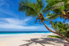 Beautiful Tropical Beach With ...