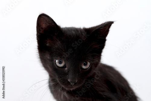 Fényképezés small black cat
