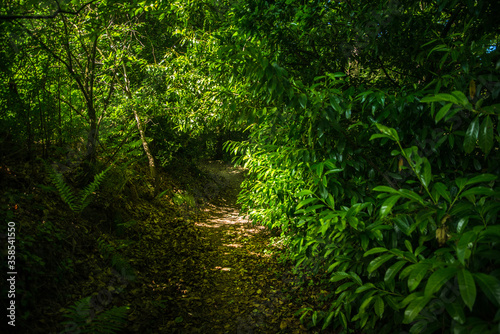 Chemin de randonnée en Bretagne Billede på lærred