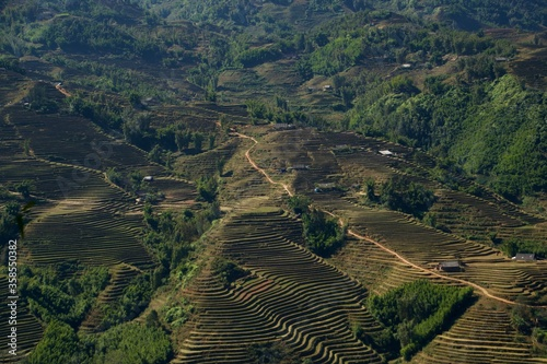 Photo Campos de arroz en Vietnam