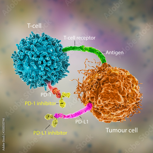 Photo Immune checkpoint inhibitors in cancer treatment