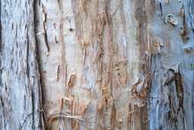 Close-up Of The Bark Of The Me...