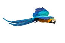 Macaws Bird Flying Isolated On...
