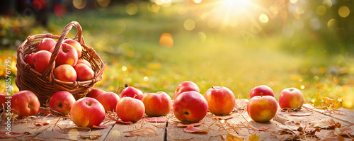 Foto Apples in a Basket Outdoor. Sunny Background