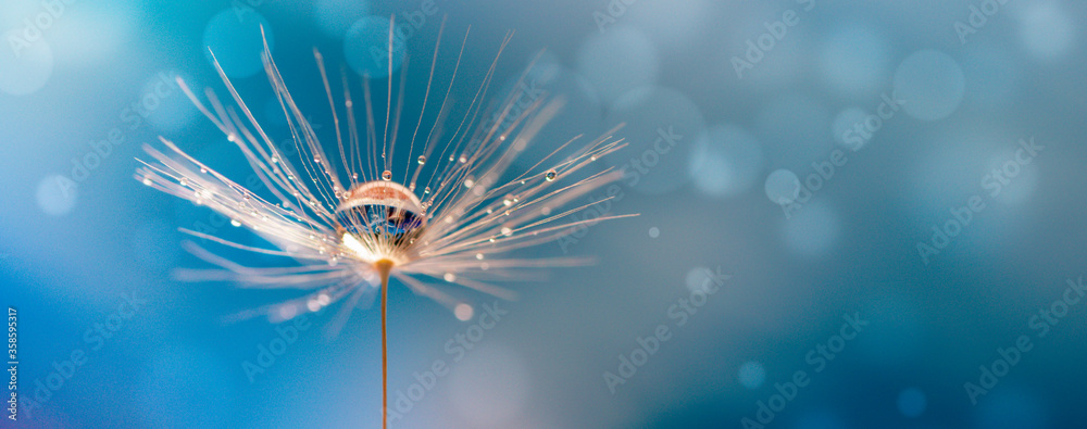 Fototapeta Abstract blurred nature background dandelion seeds parachute. Abstract nature bokeh pattern
